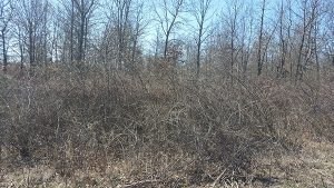Land Clearing - Before