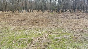 Land Clearing - After